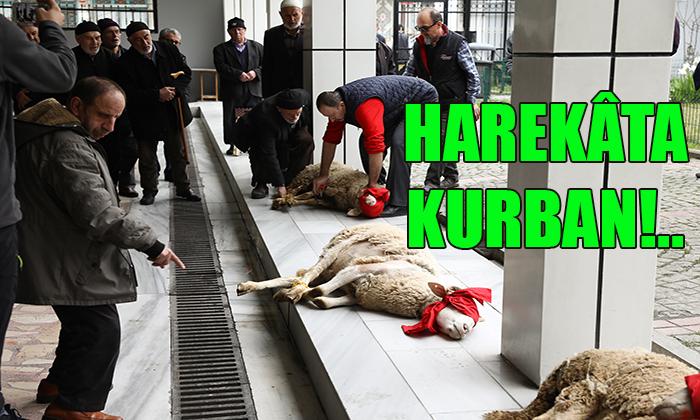 HAREKÂTA KURBAN!..